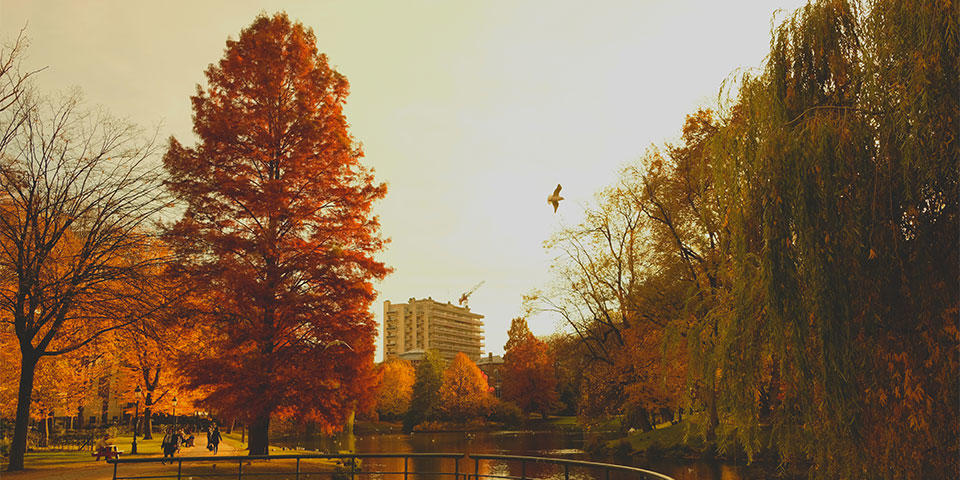 Parc Leopold in Brussels in autumn, find out on our EU Free Tour